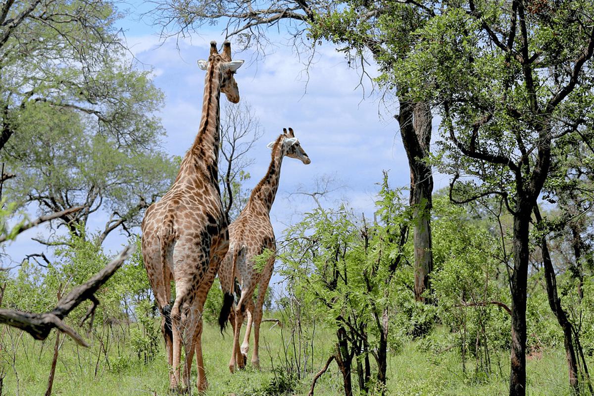 Deux choix inédits à privilégier pour des voyages en Afrique d'exceptions